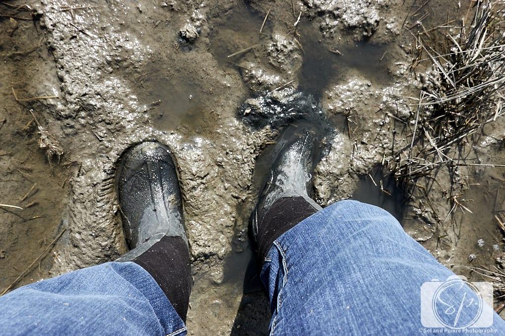 Andi stuck in Carrot Island mud