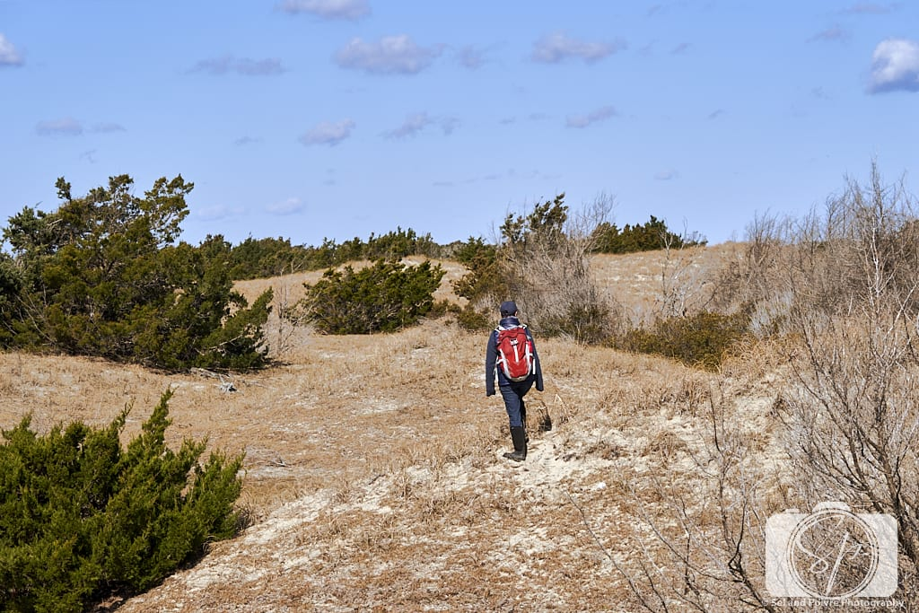 Andi walking in the dunes on Shackleford Banks