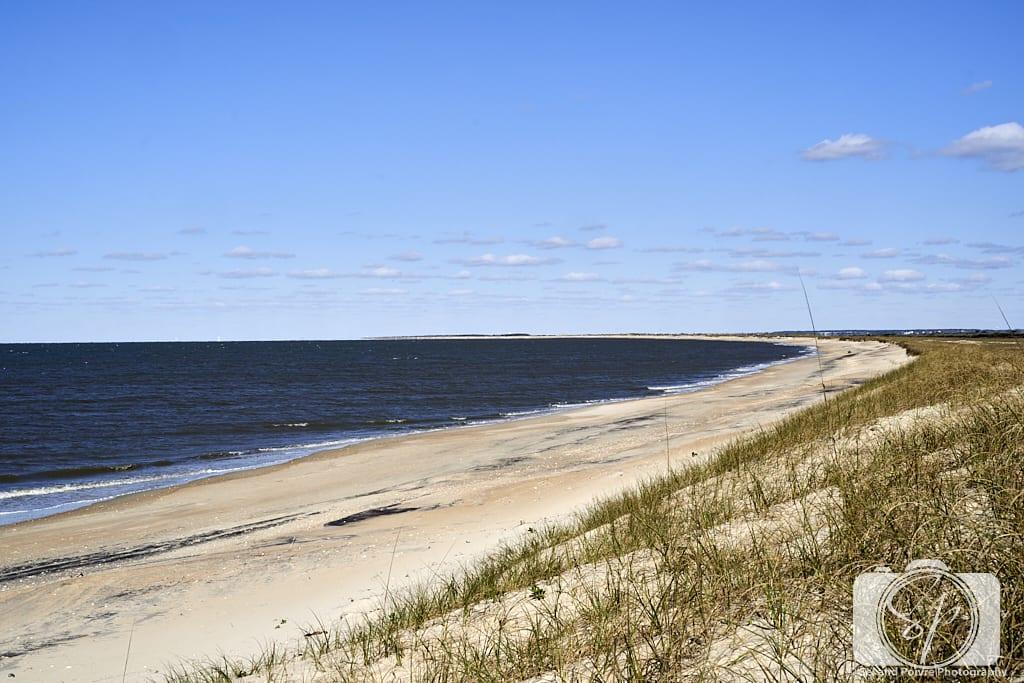Beach Shackleford Banks North Carolina