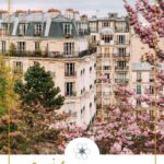 cherry blossoms in montmartre
