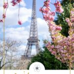 cherry blossom in from of eiffel tower