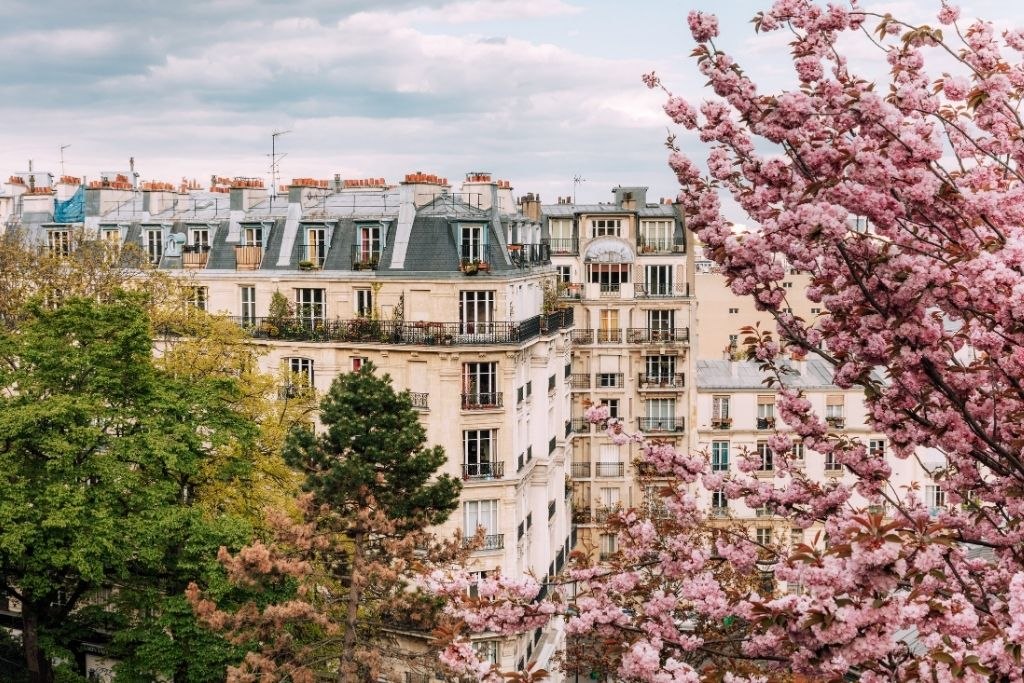 Cherry blossoms and Montmartre building