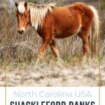 Wild horse on Shackleford Banks North Carolina