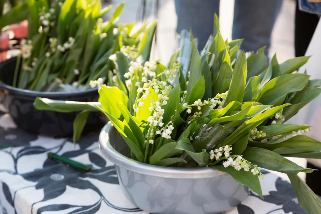 pot of lily of the valley flowers