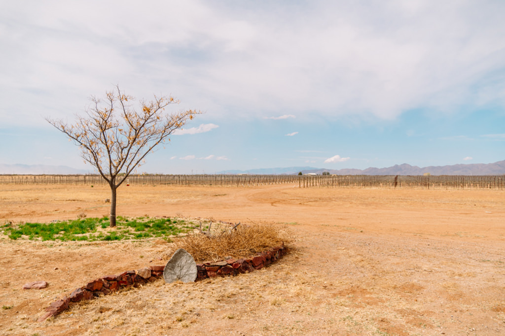 vineyard in Wilcox arizona