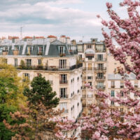 cherry blossoms near a building in spring in Paris