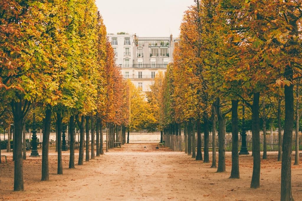 Tuileries garden in the fall